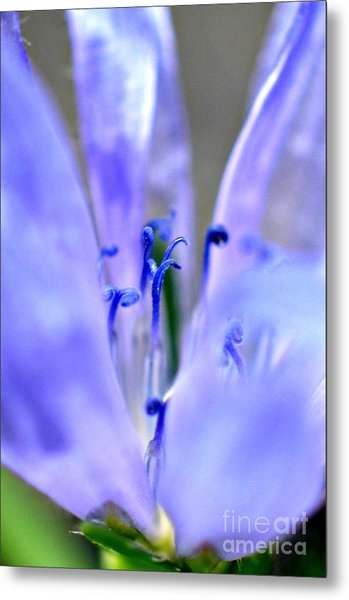 Blue Weed Metal Print by Lila Fisher-Wenzel