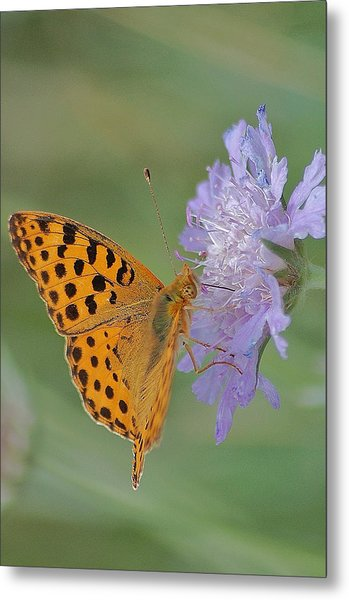 Butterfly On Right Position Metal Print by Meeli Sonn