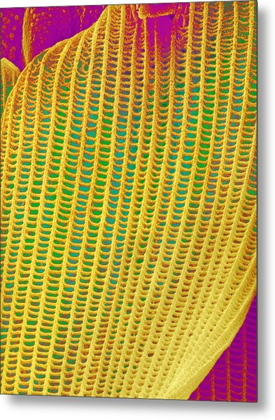 Butterfly Wing Scale,sem Metal Print by Susumu Nishinaga