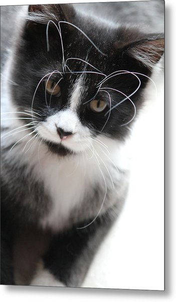 Cat In Chaotic Thought Metal Print