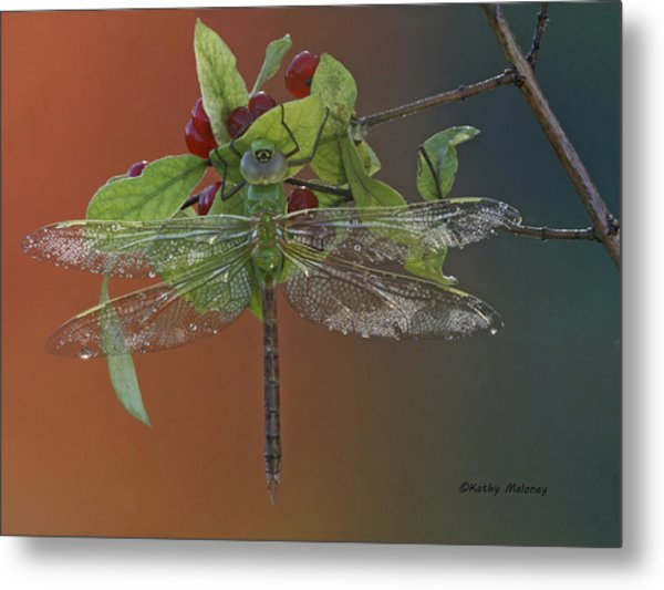Darner On Berries Metal Print