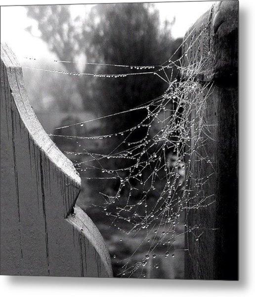 Dew On A Web Metal Print