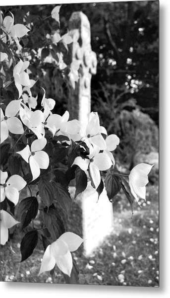 Dogwood In Cemetery Metal Print
