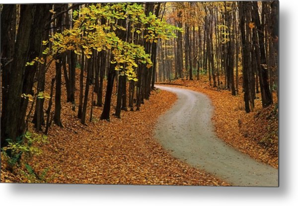 Fall Winding Road  Metal Print