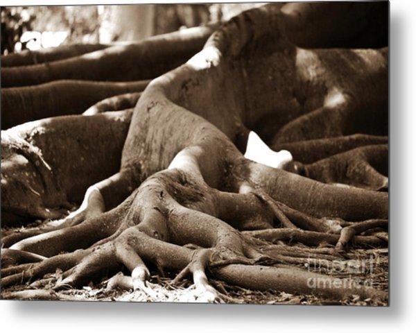 Fig Tree Roots Metal Print