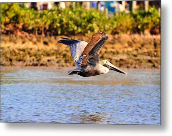 Flight Metal Print by Barry R Jones Jr