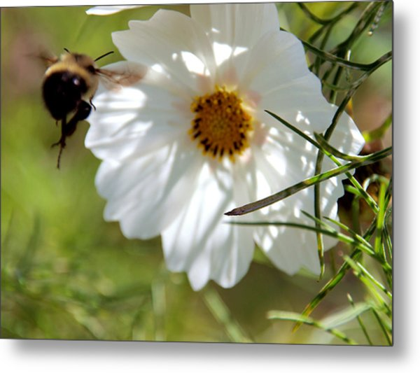 Flower And Bee Metal Print by Christy Woods