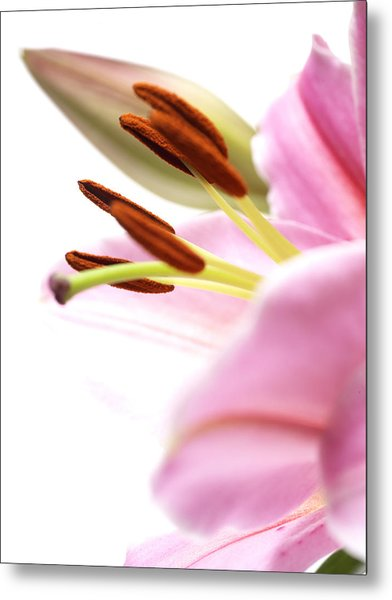 Flower Close-up Metal Print by Ignaz Uri