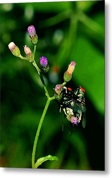 Flower Fly Metal Print