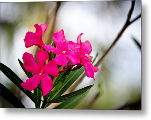 Flower Metal Print by Mike Rivera