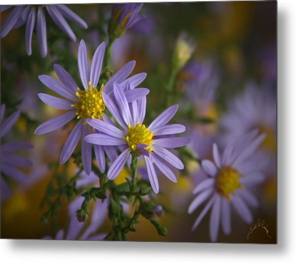 Flowers On Blue Ridge Parkway Metal Print by Williams-Cairns Photography LLC