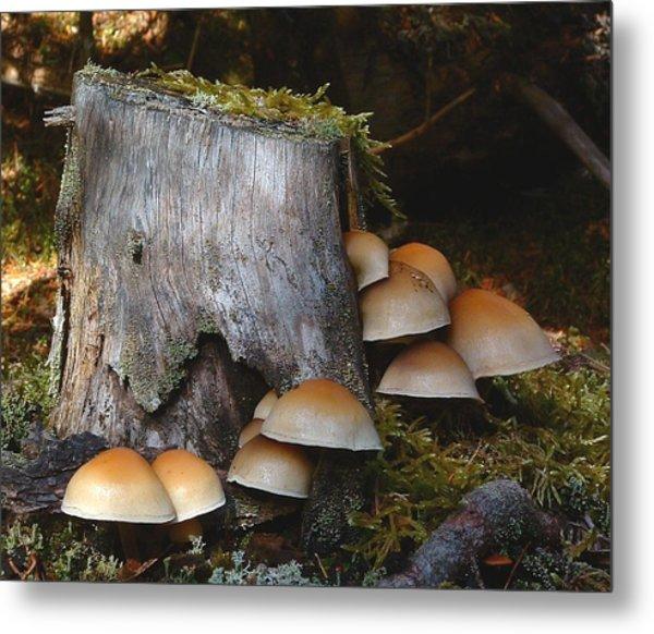 Fungus Unamed Metal Print