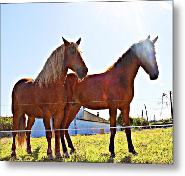 Horses Metal Print by Jenny Senra Pampin