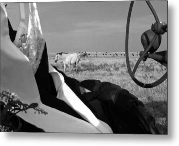 Horsing Around Metal Print by Linda Pope