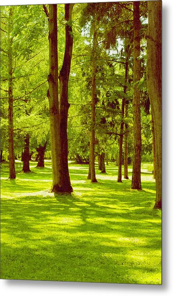 In The Park Metal Print by Design Windmill