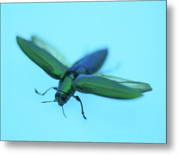 Jewel Beetle by Lawrence Lawry