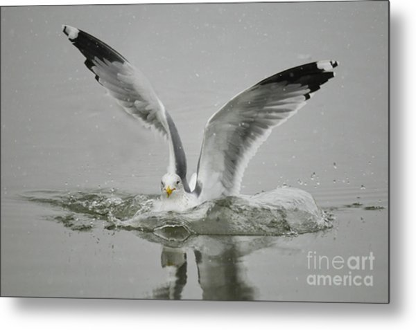 Just Missed Metal Print by Dennis Hammer