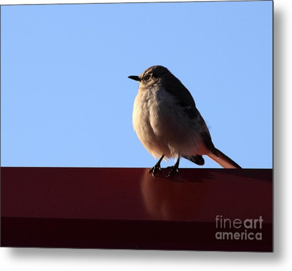 Little Bird Metal Print