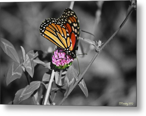 Monarch Butterfly On Clover Metal Print