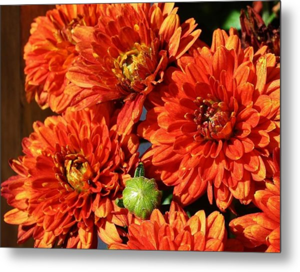 Mums The Word Metal Print by Bruce Bley