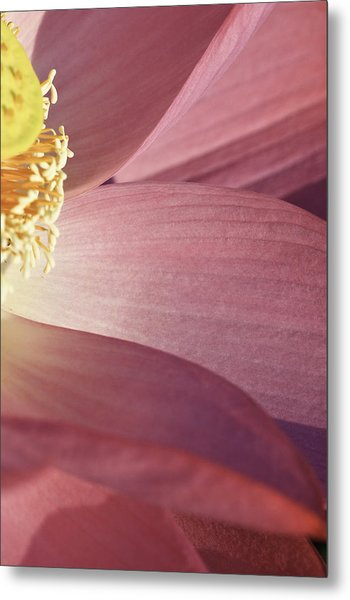 Nelumbo 'red Scarf' Metal Print