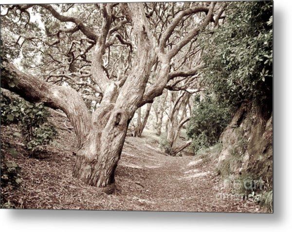New Zealand Rainfores With Pohutukawa Trees Metal Print