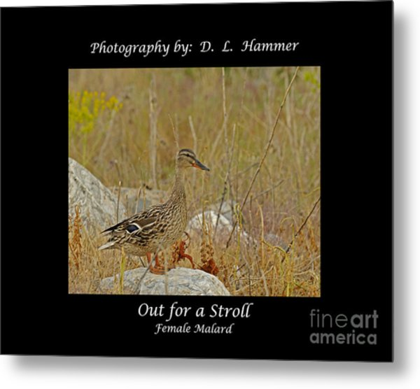 Out For A Stroll Metal Print by Dennis Hammer