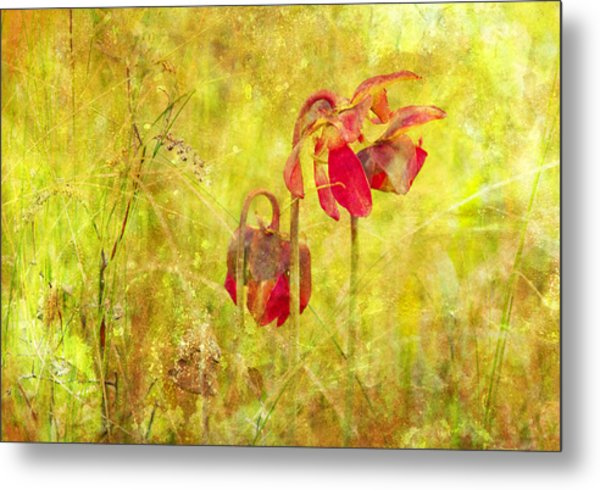 Pitcher Plant Metal Print