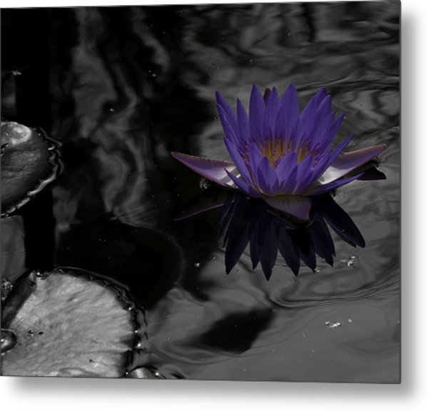 Purple Lilly In A Pond Metal Print