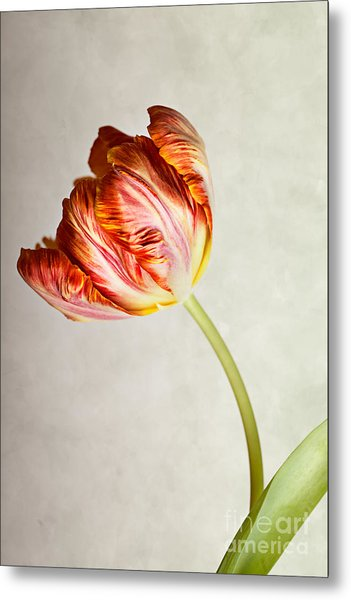 Red Tulip Metal Print