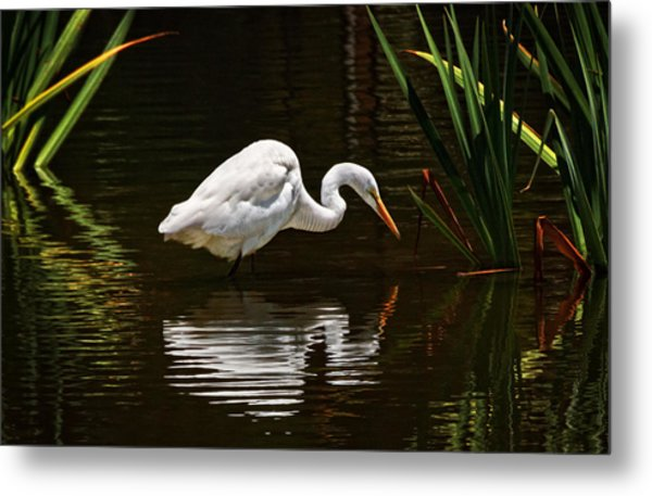 Ripples On The Pond  Metal Print by Donna Pagakis