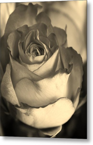 Rose In Sepia Metal Print by Bruce Bley