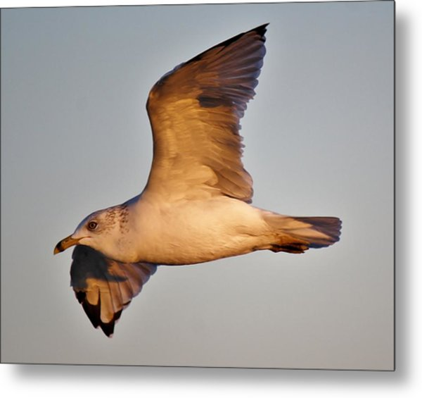 Sea Gull At Twilight Metal Print by Paulette Thomas