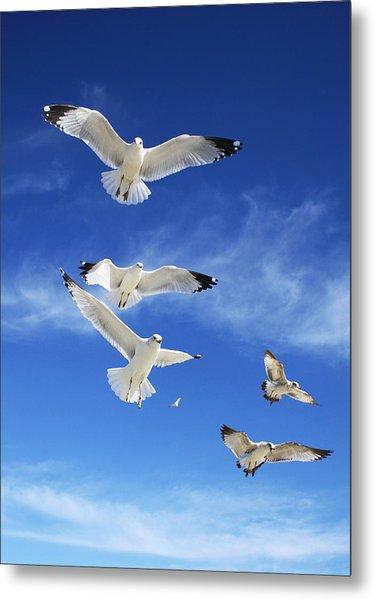 Seagulls Ascending Metal Print