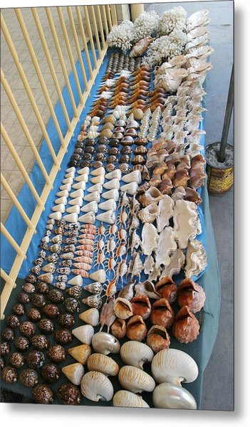 Seashell Trade Metal Print by Alexis Rosenfeld
