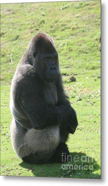 Sitting Gorilla Metal Print by Carol Wright