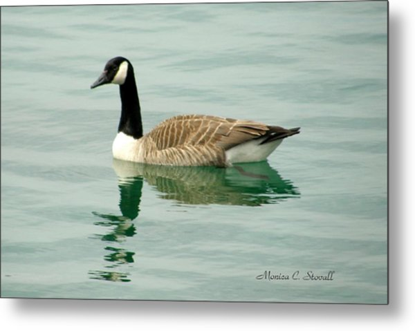 Spring Collection - Goose In Bay Harbor Metal Print