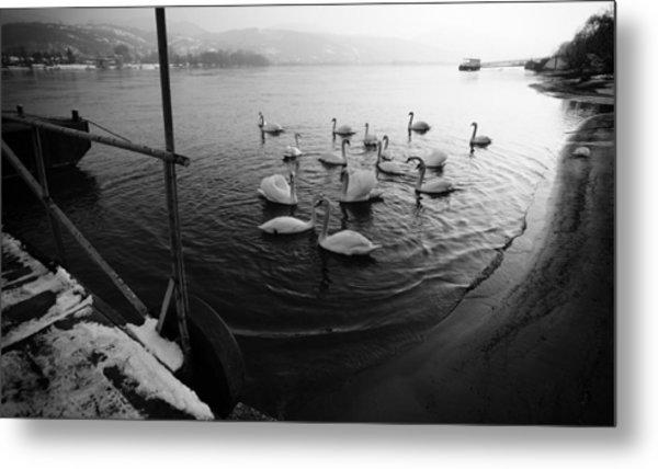 Swans On River Danube Metal Print by Tibor Puski