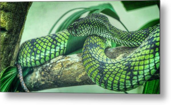 The Alert Green Snake Metal Print by Noah Katz