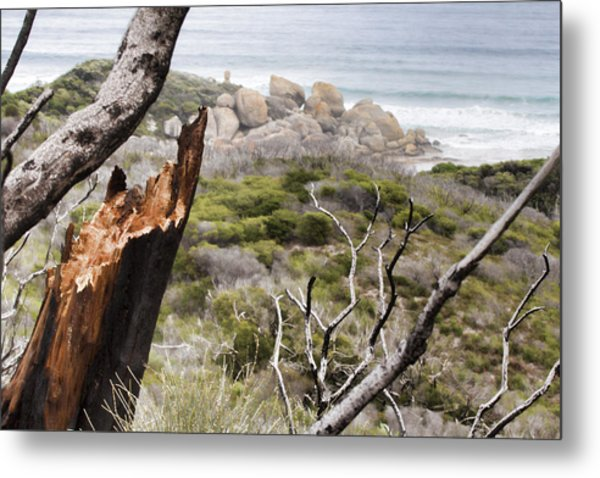 The Death Of A Tree V2 Metal Print