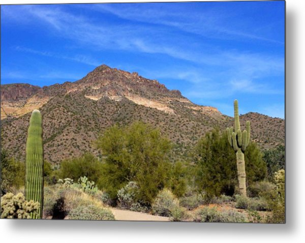 Tonto Forest Metal Print