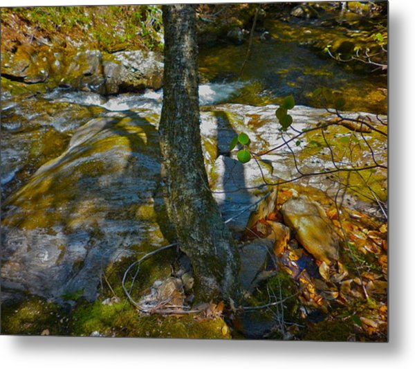 Tree And 3 Shadows Metal Print by George Ramos