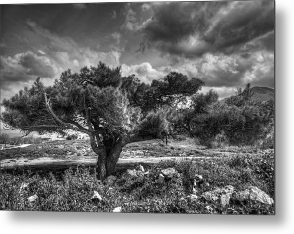 Tree In The Wind Metal Print