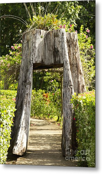 Tree Tunnel Metal Print by Blink Images