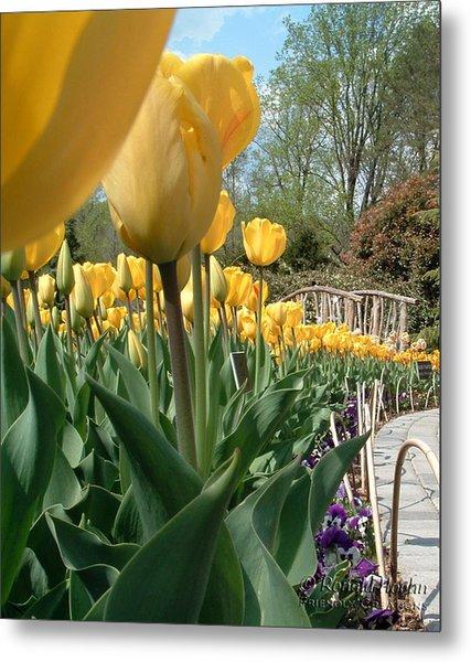 Tulips On Parade Metal Print