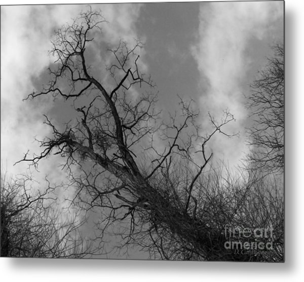 Up Tree Metal Print