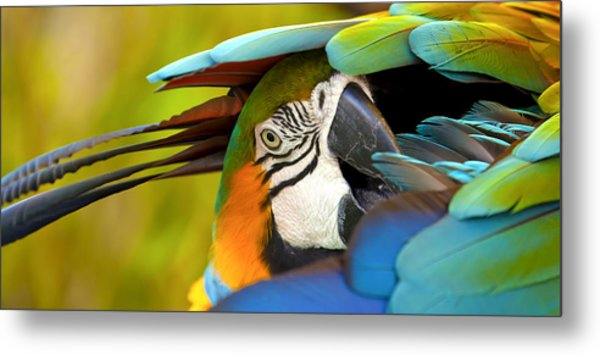 Vibrance Metal Print by Jennifer Harrington Relyea