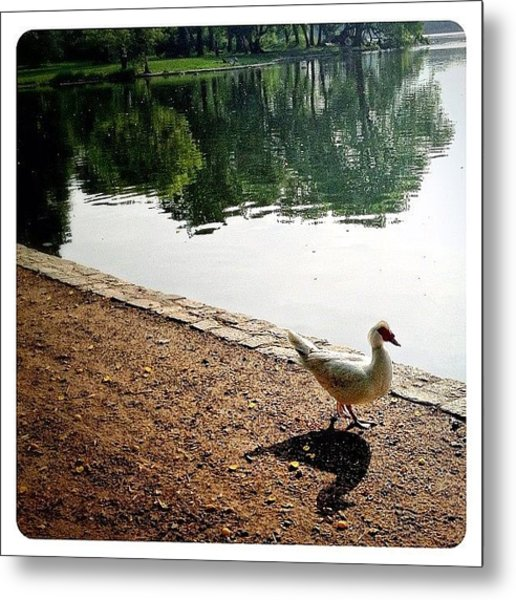 Waddle By The Water Metal Print
