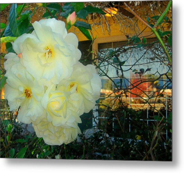 White Rose And The Reflection Metal Print by David  Brown