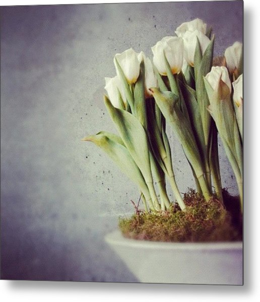 White Tulips In Bowl - Gray Concrete Wall Metal Print